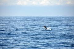 Ciesnina-Gibraltar-Delfin