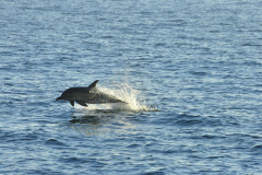 Delfin-Gibraltar